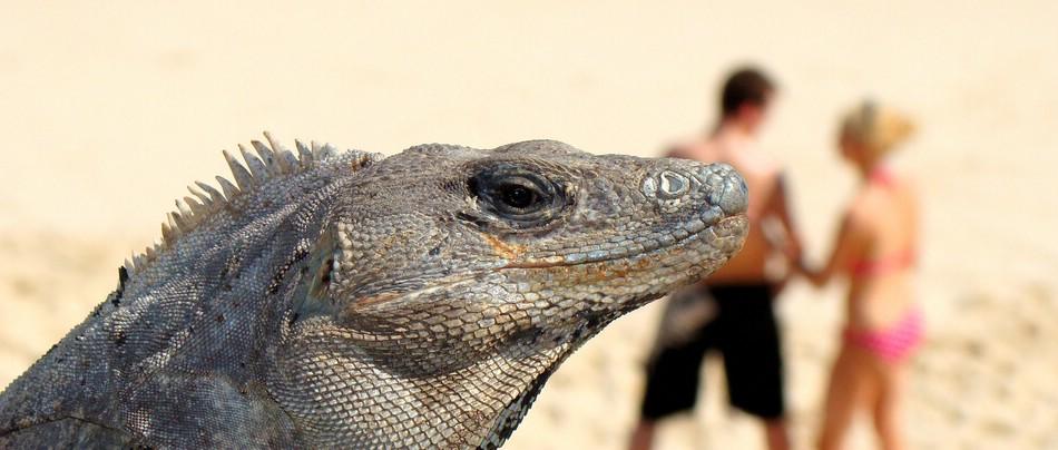 Maneater Dragon